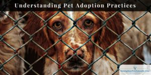 Pet Adoption | Understanding Pet Adoption Practices, Policies and Adoption Fees