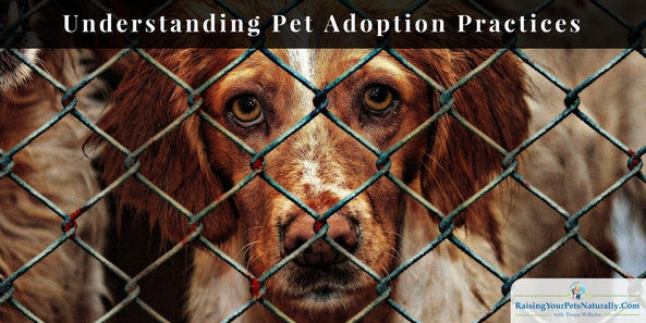 Understanding Pet Adoption Practices, Policies and Adoption Fees. Let's take a look at some of the more common rules and guidelines for adopting a pet from a local animal shelter or pet rescue.