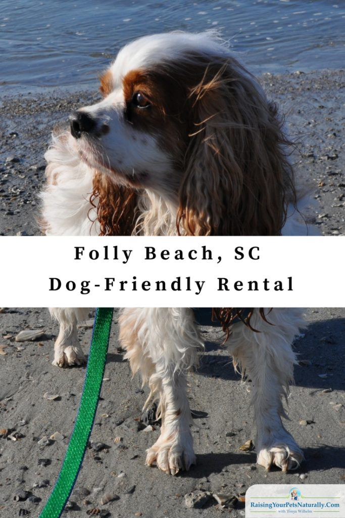Dog Friendly Vacations Folly Beach Pet Friendly Rentals