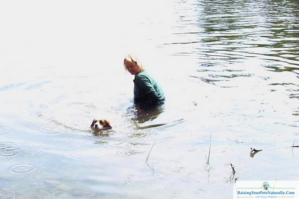 I want to share with you how I taught my dogs to swim with confidence. Learn how to teach your dog to swim.