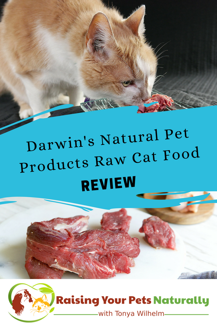 Best Raw Cat Food Brands for Cats. There are a few key components that you can use to evaluate when you are looking for the best cat food brands. #raisingyourpetsnaturally