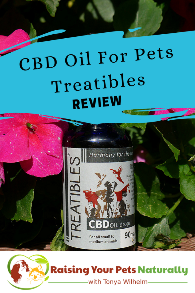 Learn how CBD Oil can help dogs and cats with anxiety, particularly from fireworks, thunderstorms and separation anxiety. Click to ease their fear. #raisingyourpetsnaturally
