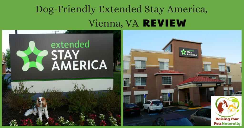 Pet-Friendly Hotels in Washington DC Area, Vienna Virginia | Dog-Friendly Hotel Extended Stay Tyson's Corner Reviews #raisingyourpetsnaturally