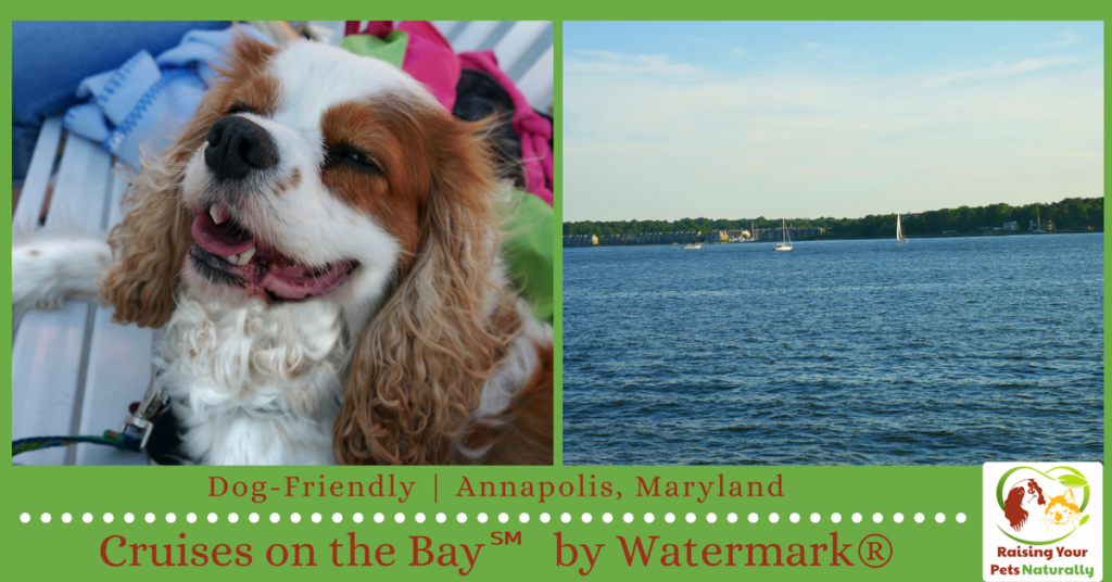 Dog-Friendly Annapolis, Maryland Activities. We enjoyed a great dog-friendly cruise on the Annapolis Harbor thanks to Cruises on the Bay by Watermark. #raisingyourpetsnaturally