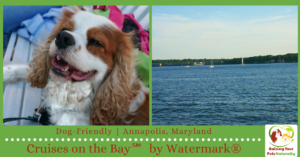 Dog-Friendly Annapolis, Maryland Activities: Dog-Friendly Cruises on Annapolis Harbor