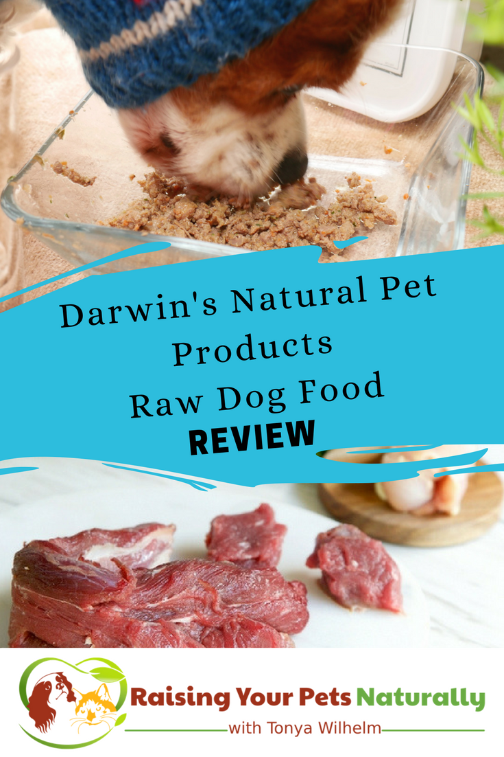 Best dog food brands for optimal health. Darwin's Natural Pet Products raw dog food diet review. #raisingyourpetsnaturally