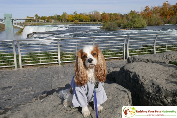 Visit Niagara Falls with your dog.