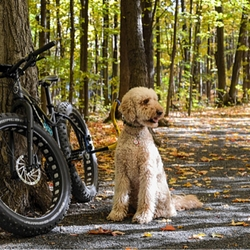Biking with dogs and giveaways