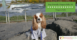 Dog-Friendly Vacations | Traveling with Dogs in Niagara Falls, New York USA