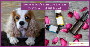 Immune Booster for Dogs | Essential Oil Remedy To Boost Dog Immune System