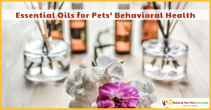 Essential Oils for Dogs, Cats, and Pets | Essential Oils for Pets' Behavioral Health