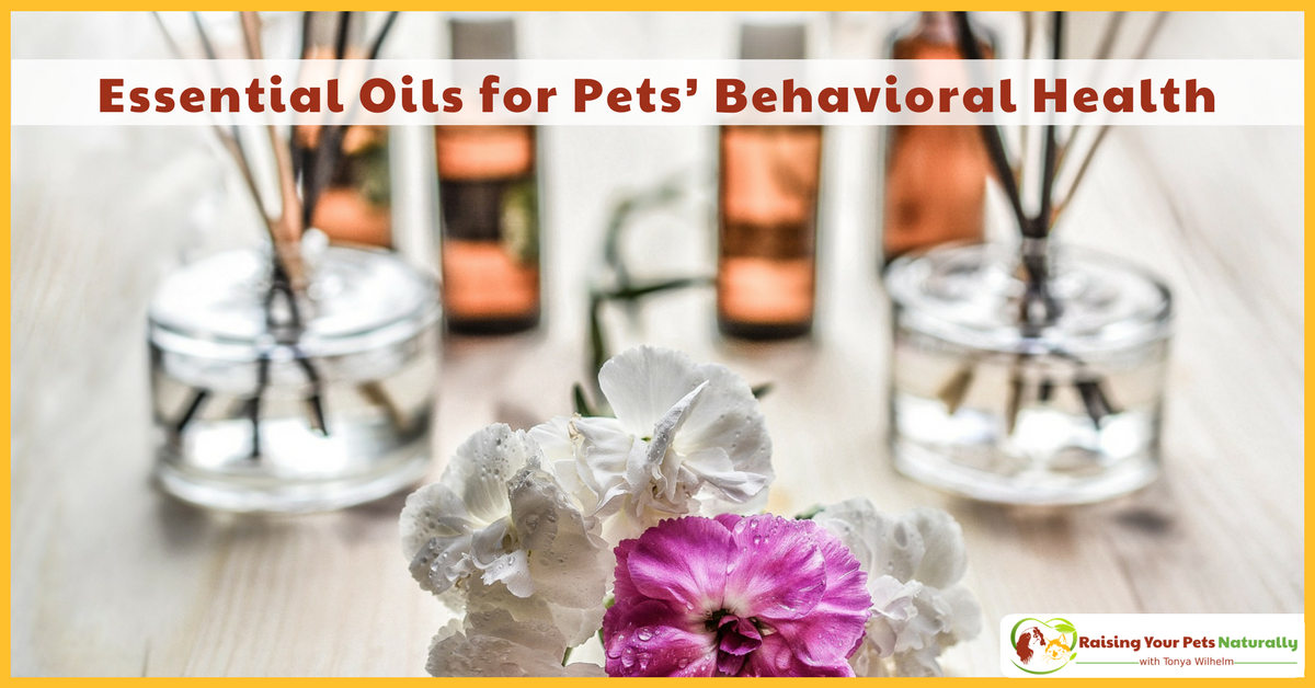 Learn how essential oils for pets can help their behavior and pet anxiety. Essential oils for dog's anxiety problems can help with their overall training plan. Learn how. #raisingyourpetsnaturally
