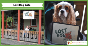 Dog-Friendly Vacations | Dog-Friendly Folly Beach, Lost Dog Cafe, South Carolina