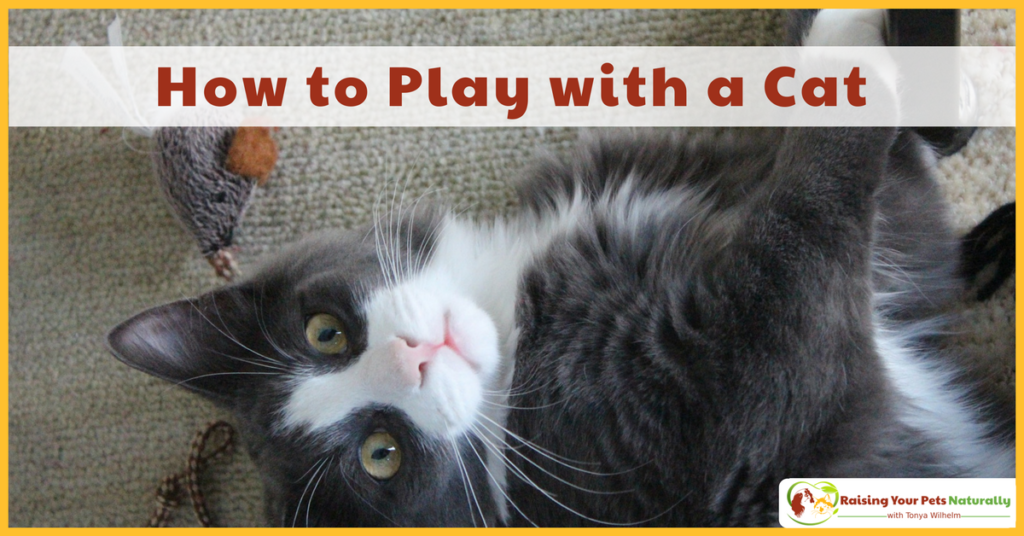 How to Play with a Cat. Learn how cat games and cat play is an important part of your cat's life. #raisingyourpetsnaturally