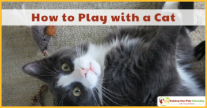 Cat Games and Cat Play | How to Play with a Cat and Cat Games