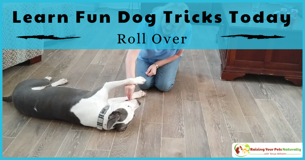 Tricks to teach your dog. How to teach a dog to roll over. This fun dog trick is one of my most requested dog trick. Learn how today. Bonus Video. #raisingyourpetsnaturally
