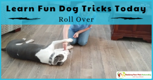 Dog Tricks to Teach Your Dog | How to Teach a Dog to Roll Over