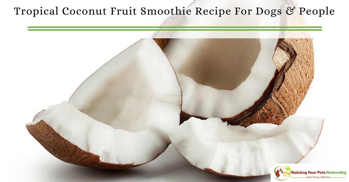 Best Healthy Smoothie Recipes for Dogs and People. Tropical Coconut Fruit Smoothie Recipe To Share. #raisingyourpetsnaturally