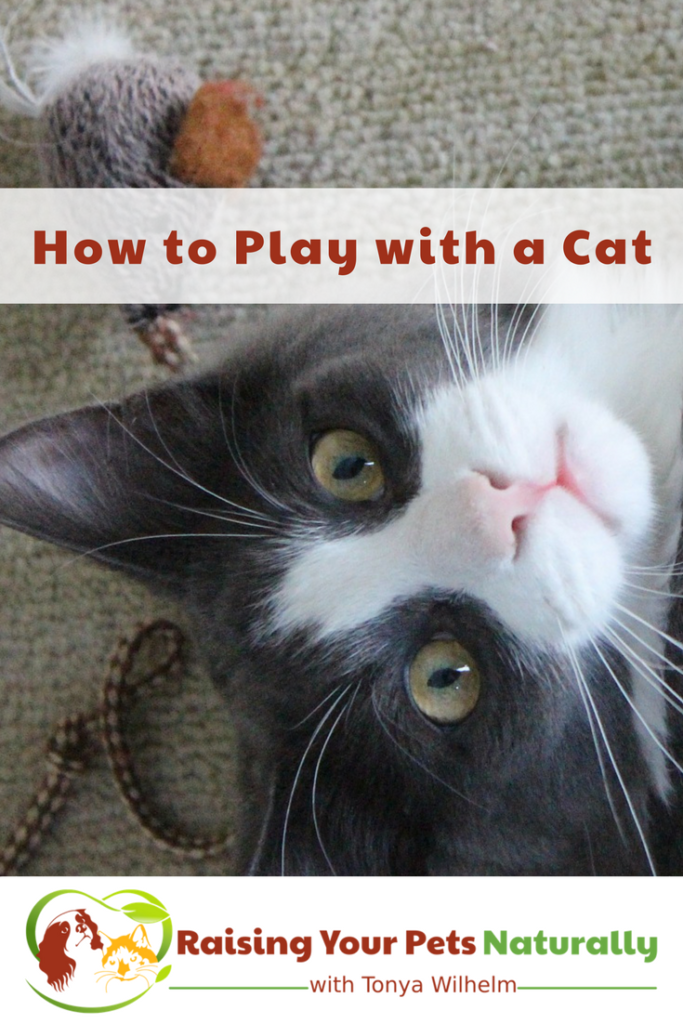 How to Play with a Cat. Learn how cat games and cat play is an important part of your cat's life. #raisingyourpetsnaturally #catgames #catplay #cattoys