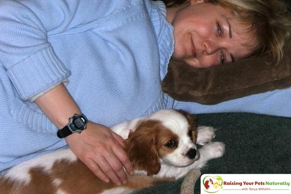 Cavalier puppy photos