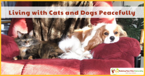 Living with Cats and Dogs | Cats and Dog Play, Chasing, Fighting and Dog Eating Cat Poop