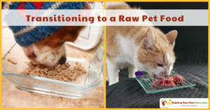 Changing to a Raw Dog Food or Raw Cat Food Diet