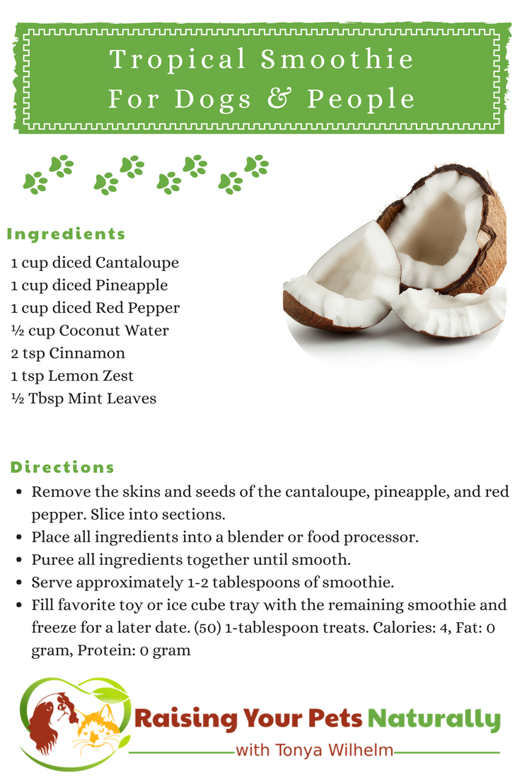 Best Healthy Smoothie Recipes for Dogs and People. Tropical Coconut Fruit Smoothie Recipe To Share. #raisingyourpetsnaturally #smoothies #smoothie #smoothierecipes #tropicalsmoothies