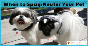 When to Neuter or Spay a Dog | Delay Her Spay Review