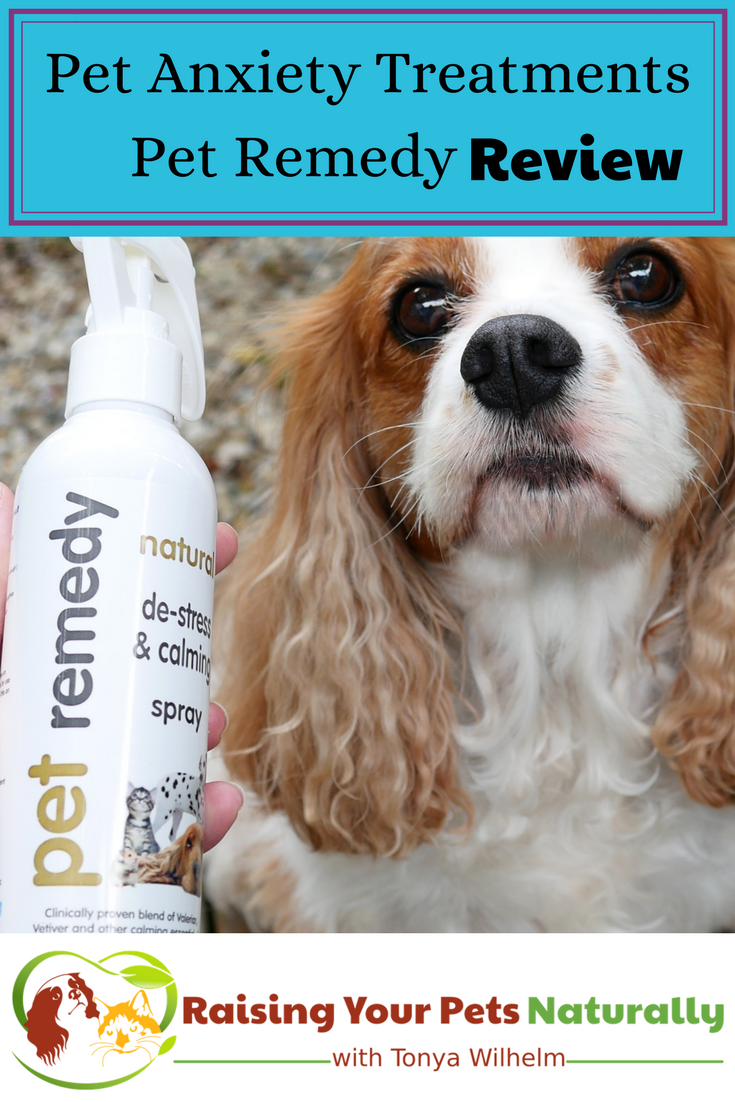 Dog and cat anxiety treatment. Pet Remedy essential oils for pet anxiety review. If you have a dog or cat with anxiety, you don't want to skip this natural calming aid. #raisingyourpetsnaturally #doganxiety #essentialoils #essentialoilsforpets #essentialoilsfordogs