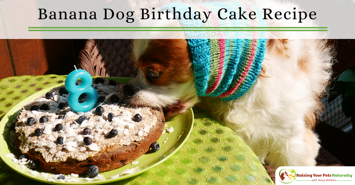 Remarkable Dog Birthday Cake Recipes Dog Friendly Banana Puppy Cake Recipe Funny Birthday Cards Online Sheoxdamsfinfo
