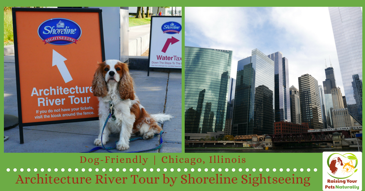 Dog-Friendly Vacations in Chicago, Illinois. Dog-Friendly Shoreline Sightseeing Boat Tour. If you are heading to Chicago with your dog, you won't want to miss this adventure. #raisingyourpetsnaturally