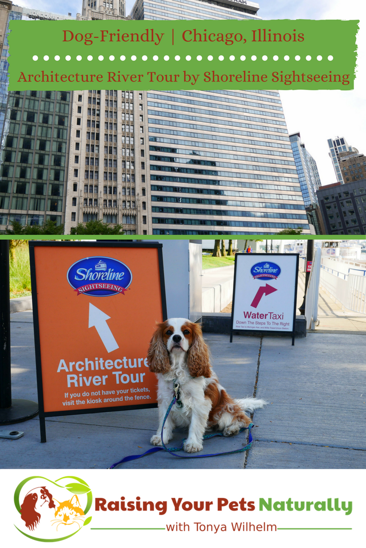 Dog-Friendly Vacations in Chicago, Illinois. Dog-Friendly Shoreline Sightseeing Boat Tour. If you are heading to Chicago with your dog, you won't want to miss this adventure. #raisingyourpetsnaturally #dogfriendly #chicago #chitown #travelingwithdogs #petfriendly