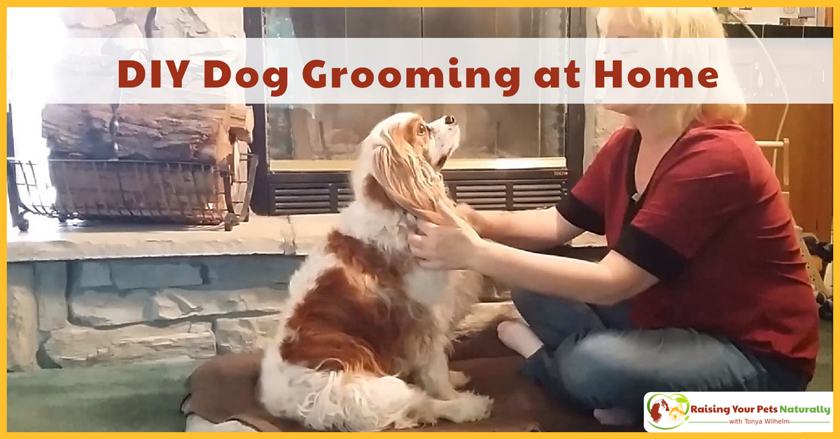 DIY Dog Grooming at Home. Basic Dog Grooming and How to Cut a Dog's Hair. #raisingyourpetsnaturally