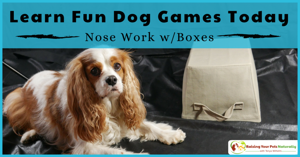 Fun games to play with your dog at home. Learn how to teach your dog canine nose work with boxes. Bonus dog training demo video. #raisingyourpetsnaturally