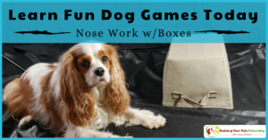 Fun Games to Play with Your Dog at Home or Indoors | Canine Scent Work and Nose Work Training with Boxes