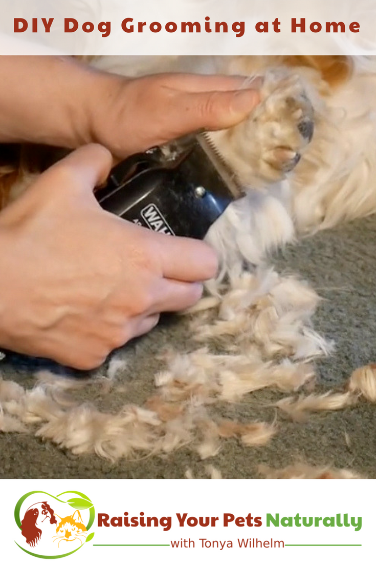 DIY Dog Grooming at Home. Basic Dog Grooming and How to Cut a Dog's Hair. #raisingyourpetsnaturally #doggrooming #diygrooming