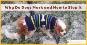 How to Stop a Dog from Marking in Your House