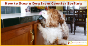 Dog Training Tips | How to Stop a Dog from Counter Surfing