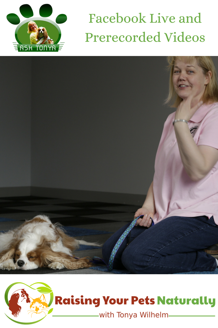 Ask Tonya on Facebook Live and in prerecorded videos. Submit your dog or cat questions today. #raisingyourpetsnaturally #facebooklive #dogtrainingvideos #catbehaviorvideos
