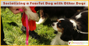 Dog Anxiety | Socializing a Fearful Dog with Other Dogs