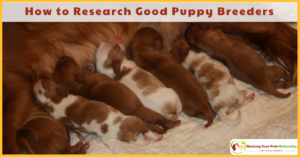 How to Research Good Dog Breeders | How to Find a Puppy Breeder