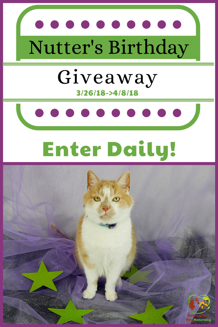 Nutter The Cat's Birthday Blog Giveaway 2018. Help me celebrate Nutter's 20th birthday in his first cat giveaway. Click for details. #raisingyourpetsnaturally #giveaway #contests #petgiveaway #catgiveaway #petcontests #catcontests