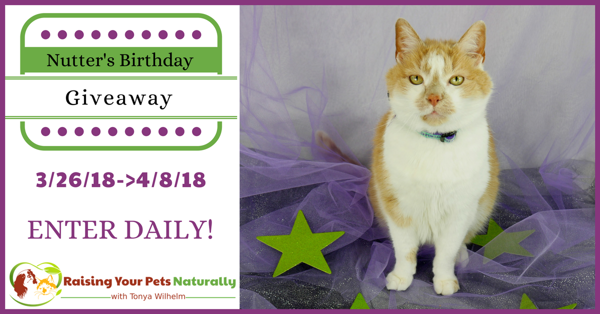 Nutter The Cat's Birthday Blog Giveaway 2018. Help me celebrate Nutter's 20th birthday in his first cat giveaway. Click for details. #raisingyourpetsnaturally