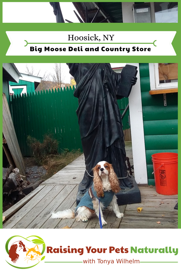 If you and your dog find yourself near Hoosick, New York and are looking for a fun, dog-friendly attraction, you should check out the Big Moose and Deli and Country store. See why. #raisingyourpetsnaturally #dogfriendly #petfriendly #dogfriendlynewyork #dogfriendlyny