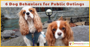 How to Help Your Dog Behave Better in Public | 6 Favorite Dog Behaviors for Public Outings