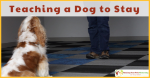 How to Teach a Dog to Stay in Place | How to Train a Dog to Stay or Wait Bonus Dog Training Video