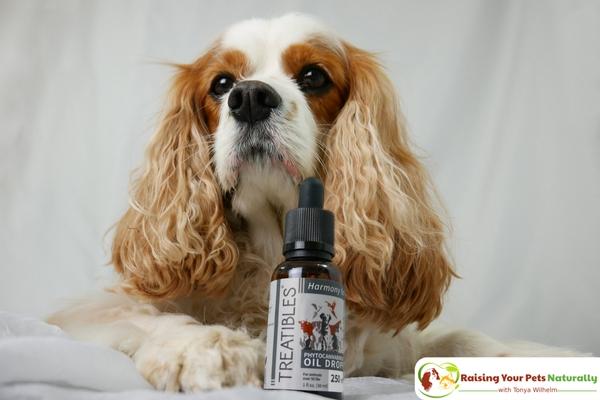 CBD Oil For Dogs with Neurological Pain | Phytocannabioind