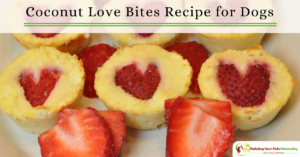 Healthy Dog Treat Recipes for Valentine's Day for Dogs | Love Bites Coconut Muffins for Dogs