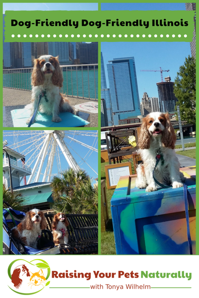 Dog-Friendly Vacations in The Midwest-Dog-Friendly Illinois. If you are traveling with dogs, you won't want to miss these Dog-Friendly Illinois attractions, hotels and destinations. #raisingyourpetsnaturally #dogfriendly #dogfriendlyillinois #dogfriendlychicago #travelingwithdogs