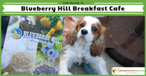 Dog-Friendly Restaurants in The Chicago Area | Blueberry Hill Breakfast Cafe Review